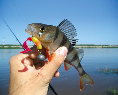 приманка для рыбы на окуня