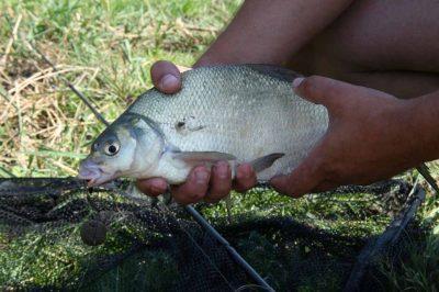 живая прикормка зимней рыбалки