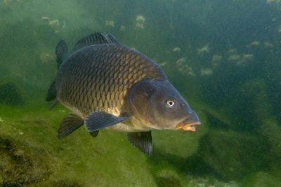 Рыба в реке