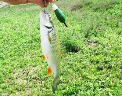 Рыбалка на поплавок