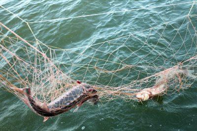 Рыба в сетке