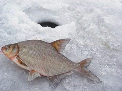 Лещ на льду