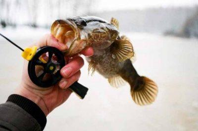 На что ловить ротана зимой