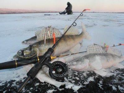 Леска для зимней ловли судака