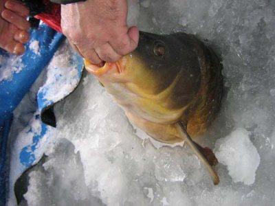 Рыба из лунки