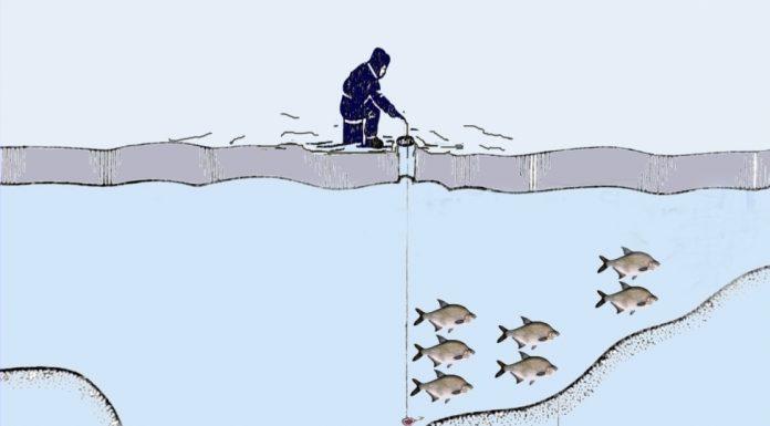 Стоянки рыбы