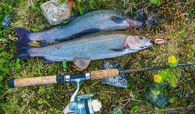 Спиннинг и рыба на траве