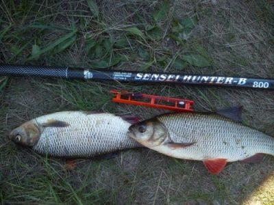 Рыба и удочка на земле