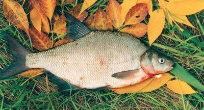 Рыба в траве