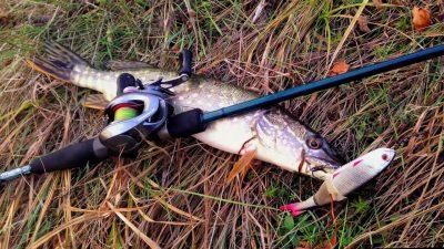 Щука осенью на реке - когда и где ловить на спиннинг