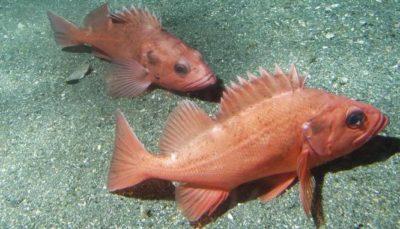 Рыбы на дне