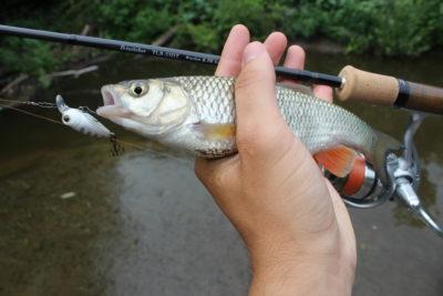 Спиннинг и рыба