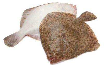 Две рыбины