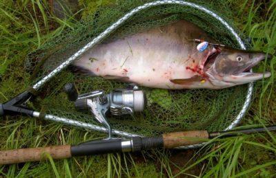 Рыба в сачке
