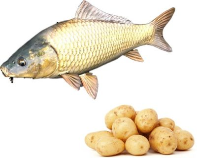 Картофель на карпа